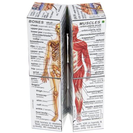 Picture of Zoobookoo Cube Book - Human Body